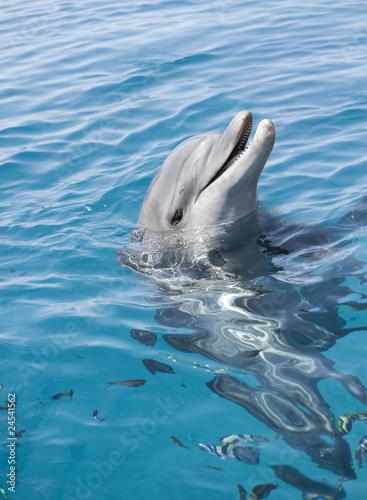 Deurstickers Dolfijn bottle-nosed dolphin