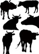 Vector silhouettes the cow an animal