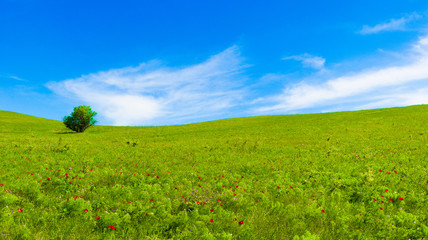 panorama of green fields