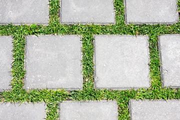 Grass betreen stones