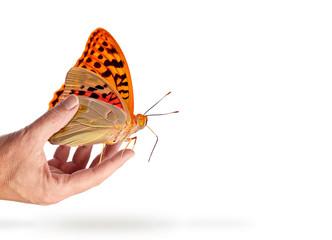 farfalla+mano