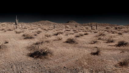 Saguaro Panorama