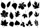 Vektoros illusztráció készlet 18-őszi levél sziluettek.
