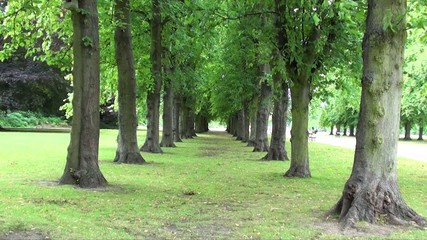 Travel through passage of trees
