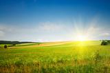 Fototapety Serene summer meadow and wonderful blue sky.