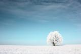 Fototapety Tree