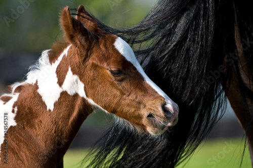 horse baby with Mommy
