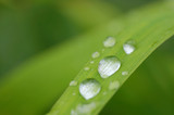 water drops on grass