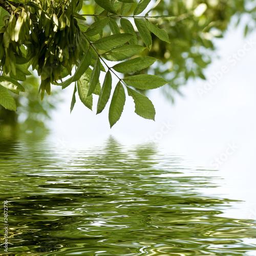 Papiers peints Bambou frène sur l'eau