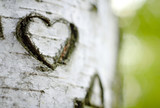 """A Carved """"Love Heart"""" on a Birch Tree"""