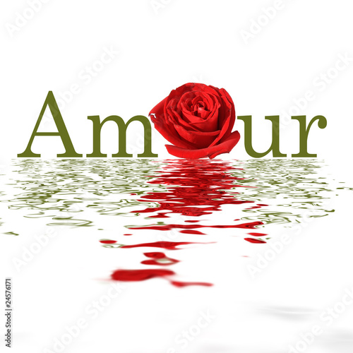 Amour - Rose - Flood