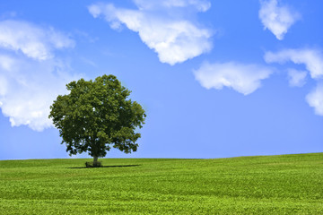 Single tree in green field under beautiful blue sky