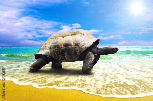 duzy-zolw-na-tropikalnej-oceans-plazy