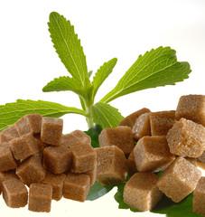 Stevia Rebaudiana mit braunem Zucker