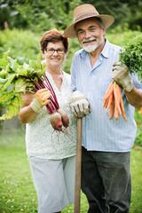 Senior couple holds harvested vegetables