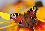 Fototapete Closeup - Tier - Insekten
