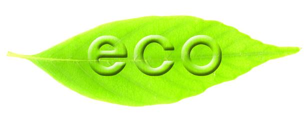 葉と浮き文字(eco)