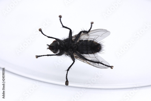 underside of a fly in a glass