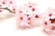 Fleurs japonnais