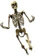 skeleton celebrate