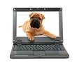 small laptop with puppy dog