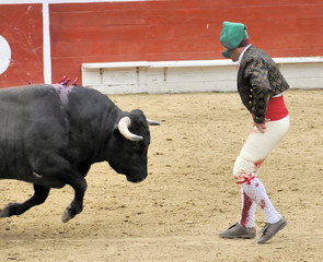 Forcado Facing Bull