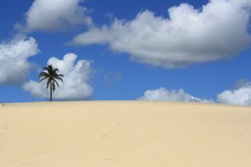 ceu azul, areia branca e arvore