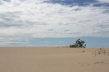 arvore no deserto