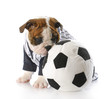 puppy with soccer ball