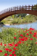 red poppies flowers meadow river wooden bridge
