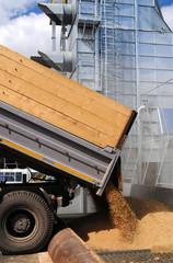 grain dumping