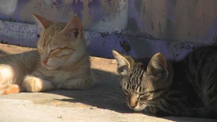 Gatos somnolientos