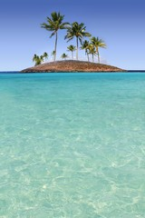 Paradise palm tree island tropical turquoise beach