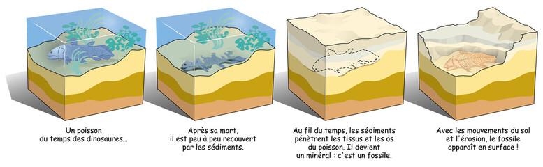 Terre - La formation d'un fossile