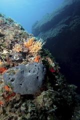 spugna marina