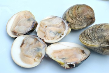 Raw Clams on the Half Shell