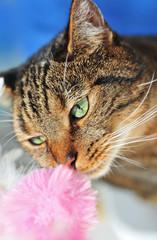 Katze schnüffelt