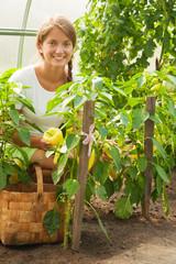 girl is picking  green pepper