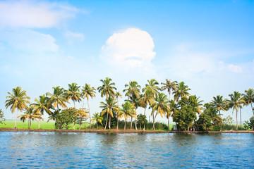 Coconut tress along the backwaters , India.