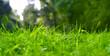 Saftige, grüne Wiese