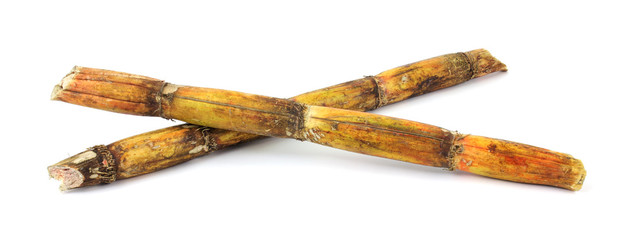 Two pieces of sugar cane stalks