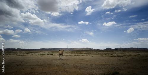 骆驼队剪影矢量素材