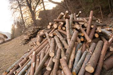 Baumstämme, Holz, Forstwirtschaft