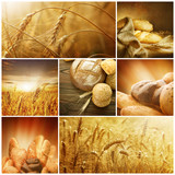 Fototapety Wheat Collage.Harvest concepts