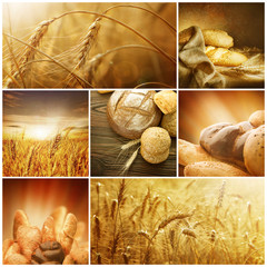 Wheat Collage.Harvest concepts
