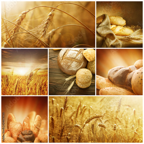 Wheat Collage.Harvest concepts © Subbotina Anna