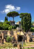 palatino vista con pini hdr, roma