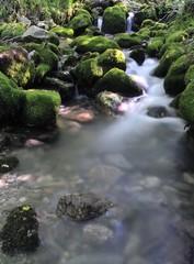 Rincon de Muniellos,Asturias,España
