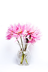 Bunch of dahlia flowers in a glass vase