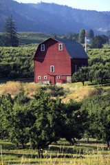 Red barn & pear orchards in the Hood River Valley Oregon.